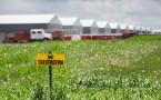 Bird Flu Outbreak Threatens Iowa's Chicken Farm Industry