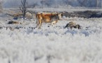 Oklahoma Prepares For Another Big Winter Storm