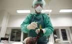 Europe On High Alert Following H5N8 Bird Flu Cases