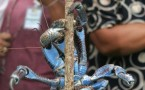 Minister, Mahara Okeroa holds a coconut crab as Ge